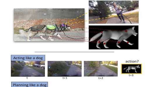 Photos showing how dogs act, plan, and learn